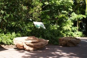 """Michele Oka Doners """"Chitra Benches"""" sind Skulpturen aus australischer Pinie und tropischem Mandelbaum. Letztere sind beide botanische Eindringlinge, die Bänke sollen den Platz von öffentlichen Bänken erobern, so wie sich eindringende Pflanzen verbreiten."""